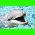 جميلة الدلافين اللغز! لعبة icon