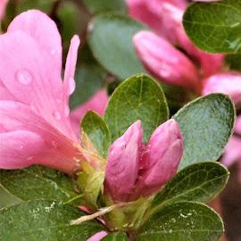by Allen Wright - Flowers Flower Buds