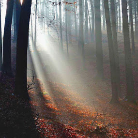Mysterious forest by Jana Černošková - Landscapes Forests ( mysterious, forest, sun rays,  )
