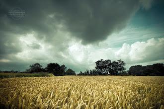 Photo: Hairiamont field, Belgium
