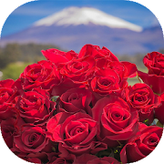 Beautiful flowers and roses pictures