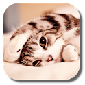 Lazy Cat Live Wallpaper icon