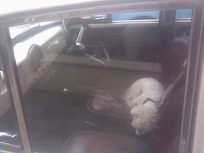Photo: No electric seat heaters, instead the old classic warmer, the pet dog, in matching hue, of course.