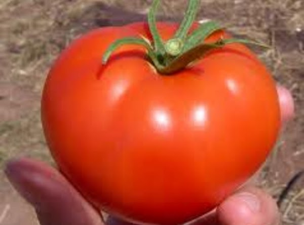 Tomatoes are widely known for their outstanding antioxidant content, including, of course, their oftentimes-rich...
