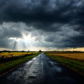 Hungarian skies CLXXIV. by Zsolt Zsigmond - Transportation Roads ( stormy, clouds, soad, sky, sunflowers, dark, sunrays )
