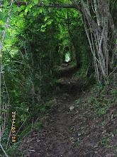 Photo: Chemin en sous-bois sur le GR