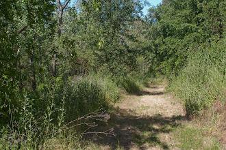 Photo: Putah Creek - Russell Ranch - Kinsella Road