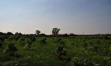 Photo: Vue de la plantation