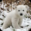 Polar Bear Wallpapers icon