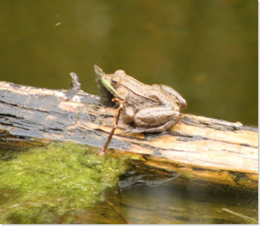 winterfrog