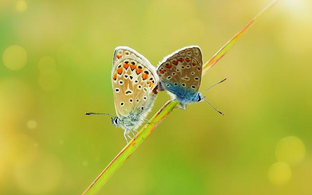 Butterfly - New Tab in HD