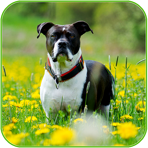 App Insights Dogs Wallpapers 4k Apptopia