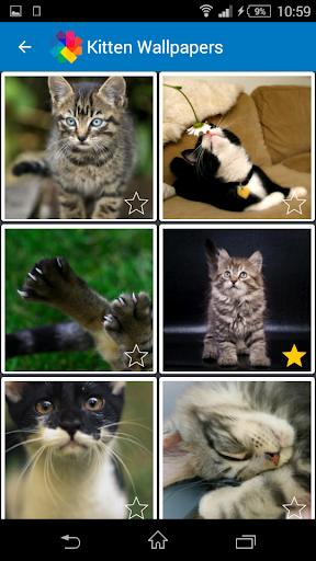 Kitten Wallpapers