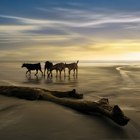 Beach Dogs by Ketut Manik - Animals - Dogs Playing