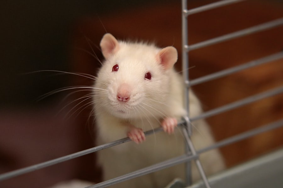 Operant conditioning (A complete guide)