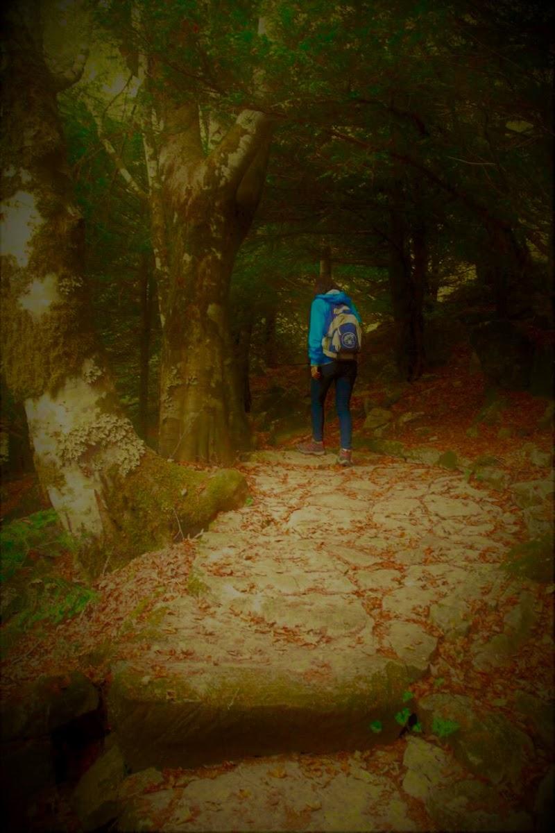 Il bosco incantato  di AngeloEsse