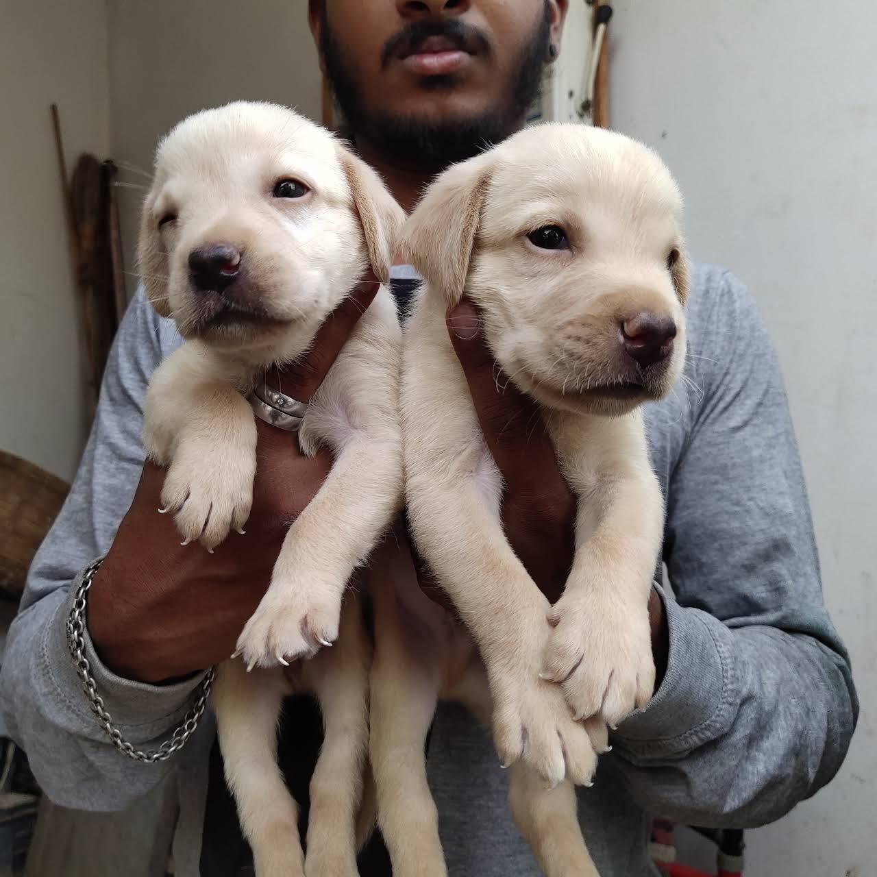 Home pets vellore & dog training center vellore - Pet Store