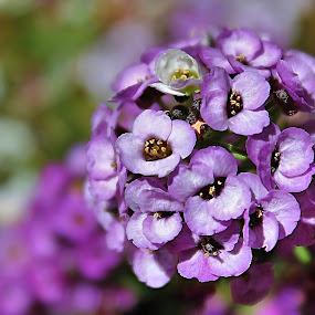 by Tammy Cassford - Flowers Flower Gardens