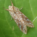 Hickory Tussock Moth or Hickory Tiger Moth