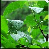 Rainstorm Video Live Wallpaper