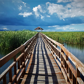 The old boardwalk by Stephanie Veronique - Uncategorized All Uncategorized ( national park, decking, grass, thailand, clouds, boardwalk, water )