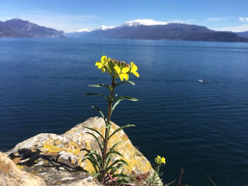 il fiore, il lago e la montagna di mcamoruso