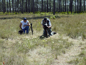 Photo: Brian and Siggi filming a bunch of Venus Flytraps at the Florida Panhandle.
