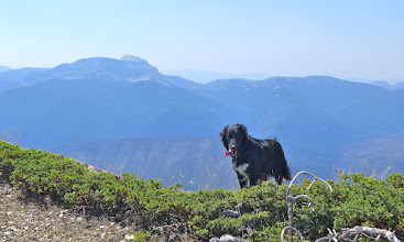 Photo: Missy with Sugarloaf Mtn. on horizon