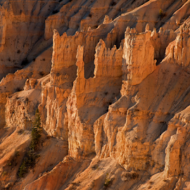 Bryce Canyon Sunrise by Phyllis Plotkin - Landscapes Caves & Formations ( utah, formations, hoodoos, sunrise, bryce canyon, rocks )