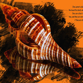 Seashell 10 by Dave Walters - Typography Quotes & Sentences ( macro, typography, nature, seashell, lumix fz2500, colors )