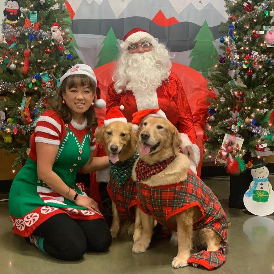 MJ and her goldens and Santa pet sitting and dog walking
