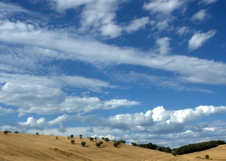 Cielo, ulivi e campi di grano di andrea63
