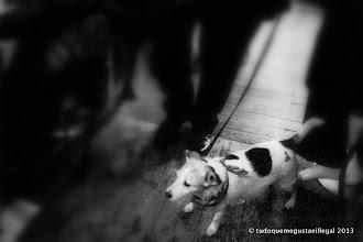 Photo: paw sho