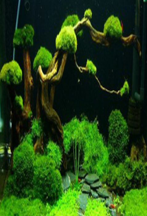 101 Aquascape Design Android Apps on Google Play
