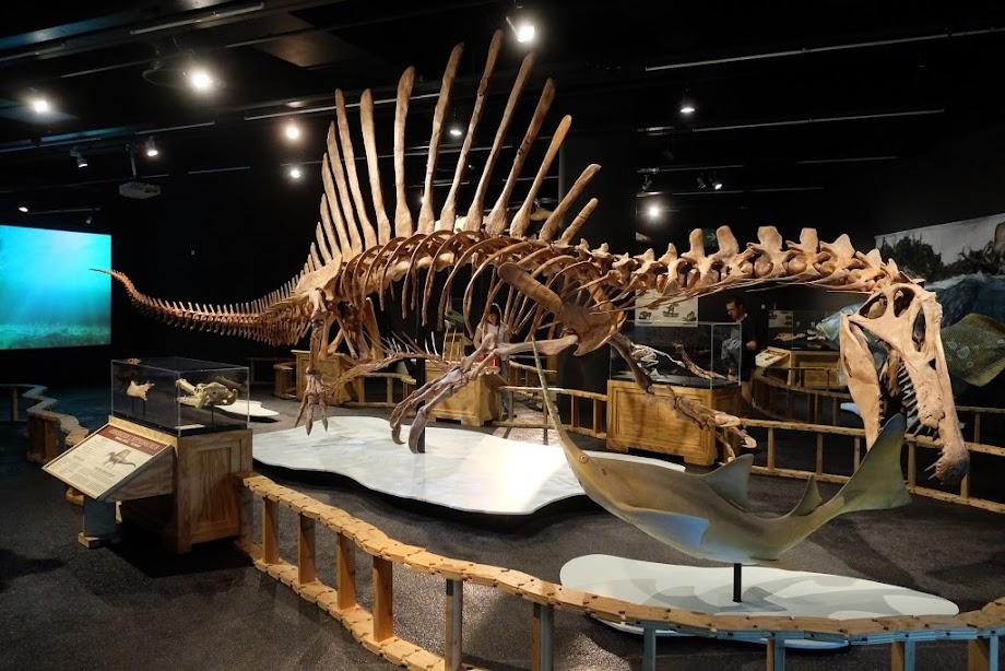 Foto Museu de Ciències Naturals de Barcelona 19