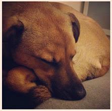 Photo: Bonus sleeping Lazer-dog