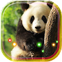 Panda White and Red live wallpaper