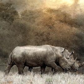 Deuce by Bjørn Borge-Lunde - Digital Art Animals ( wild animal, animals, wilderness, nature, wildlife, africa, rhino )