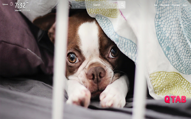 Cute Dogs And Puppies Wallpapers New Tab