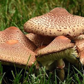 by Joyce Williams Carr - Nature Up Close Mushrooms & Fungi