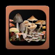 App Icon for FunKey: Key to Agarics App in Czech Republic Google Play Store