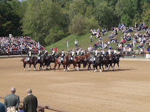 Photo: Die Hengstparade Moritzburg beginnt