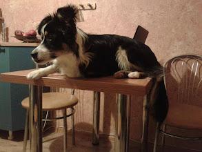 """Photo: Wieści od Luśki: """"Luska adoptowana od Was 1 kwietnia tego roku w pryma aprylis dlatego taka pocieszna stół kuchenny to jej ulubione miejsce!!"""" Dziękujemy za zdjecia!"""