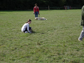 Photo: DogBasics Fun Day 2013 - Lily and Henry Whippet, Amanda and Jamie Golden