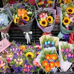 Flower Market in Hong Kong in Hong Kong, , Hong Kong SAR