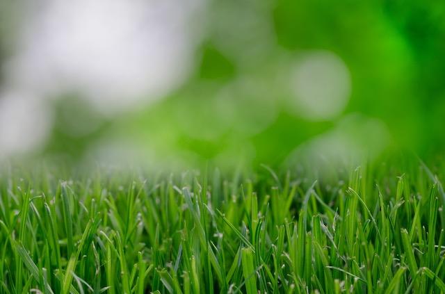 nature-garden-grass-lawn.jpg