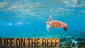 Life on the Reef thumbnail