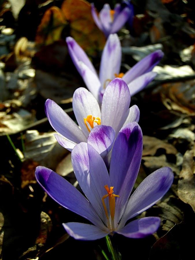 ♥ by Mirela Korolija - Nature Up Close Flowers - 2011-2013