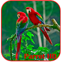 Parrots HD Live Wallpaper APK