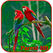 Parrots HD Live Wallpaper